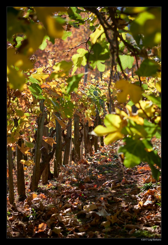 Boves Fall 17-10-23